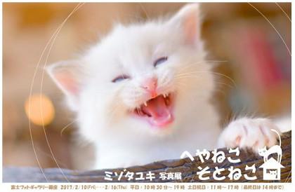 ミゾタユキ写真展 へやねこ そとねこ