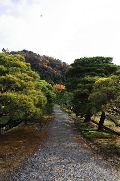 2016 12 17 修学院離宮 上離宮への松並木 ブログ用.jpg