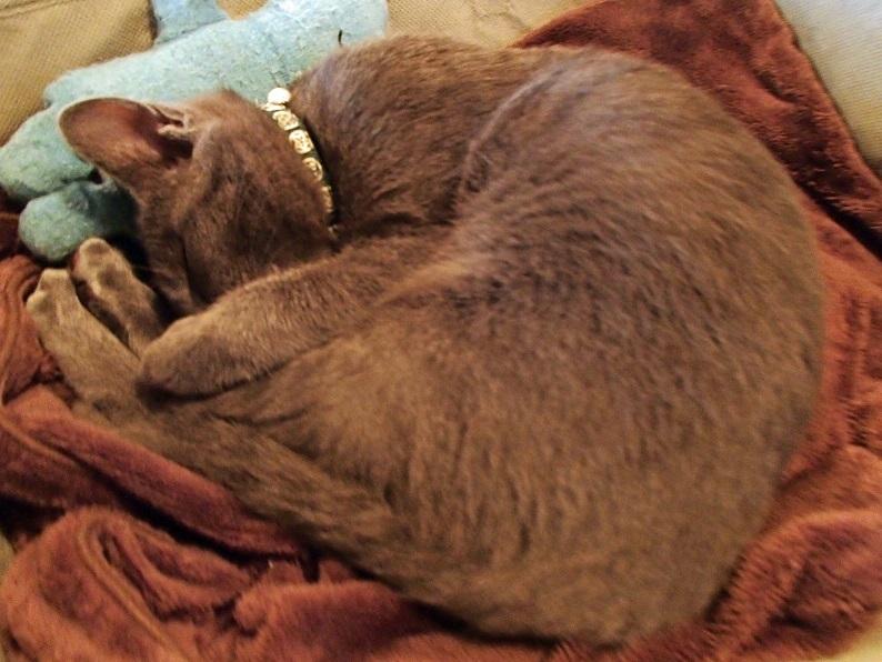 2017 1 21 我が家の猫に似てた ブログ用.jpg