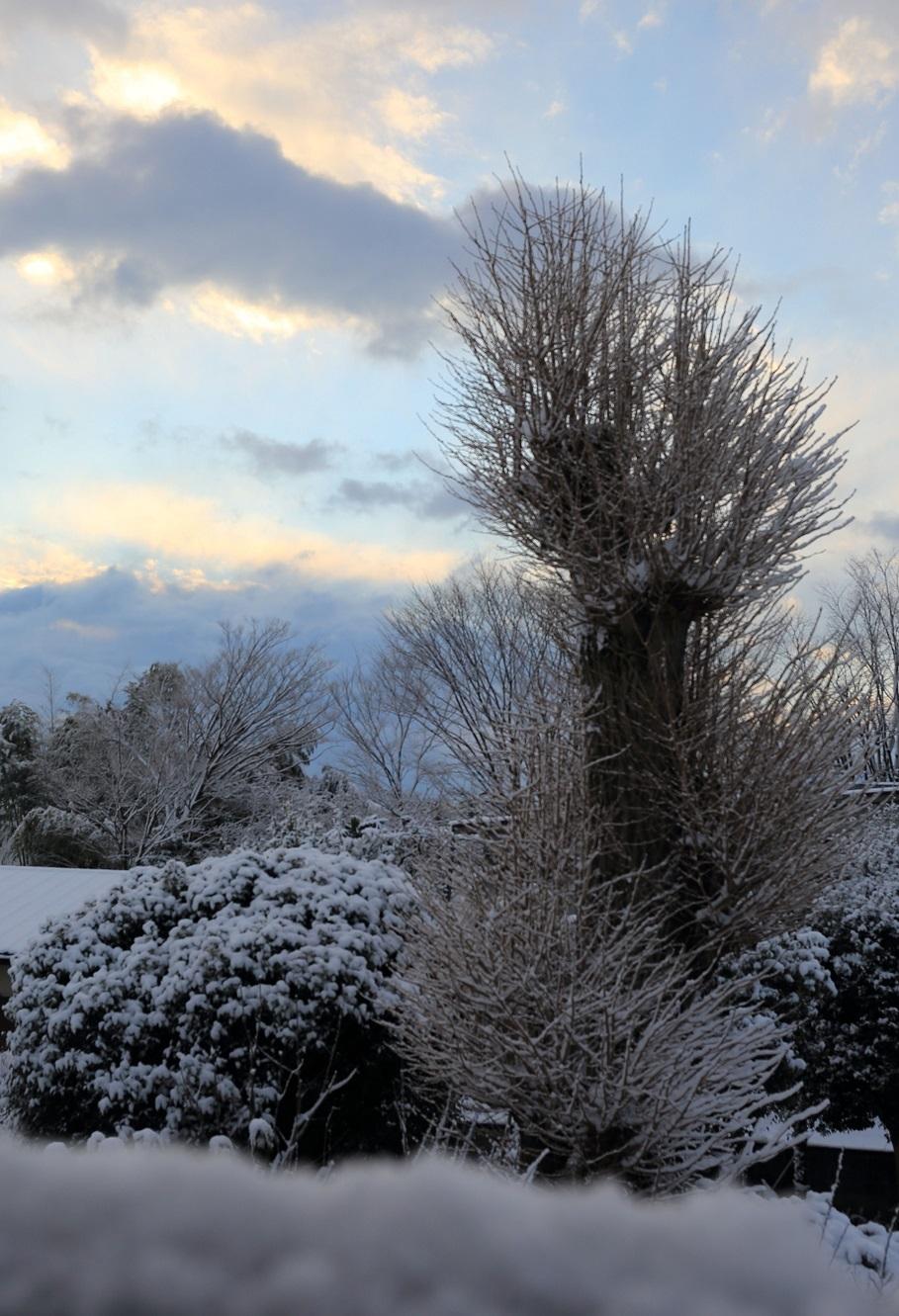2017 2 10 イチョウの冠雪 ブログ用.jpg