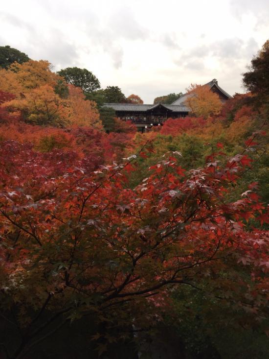 東福寺~通天橋からの紅葉