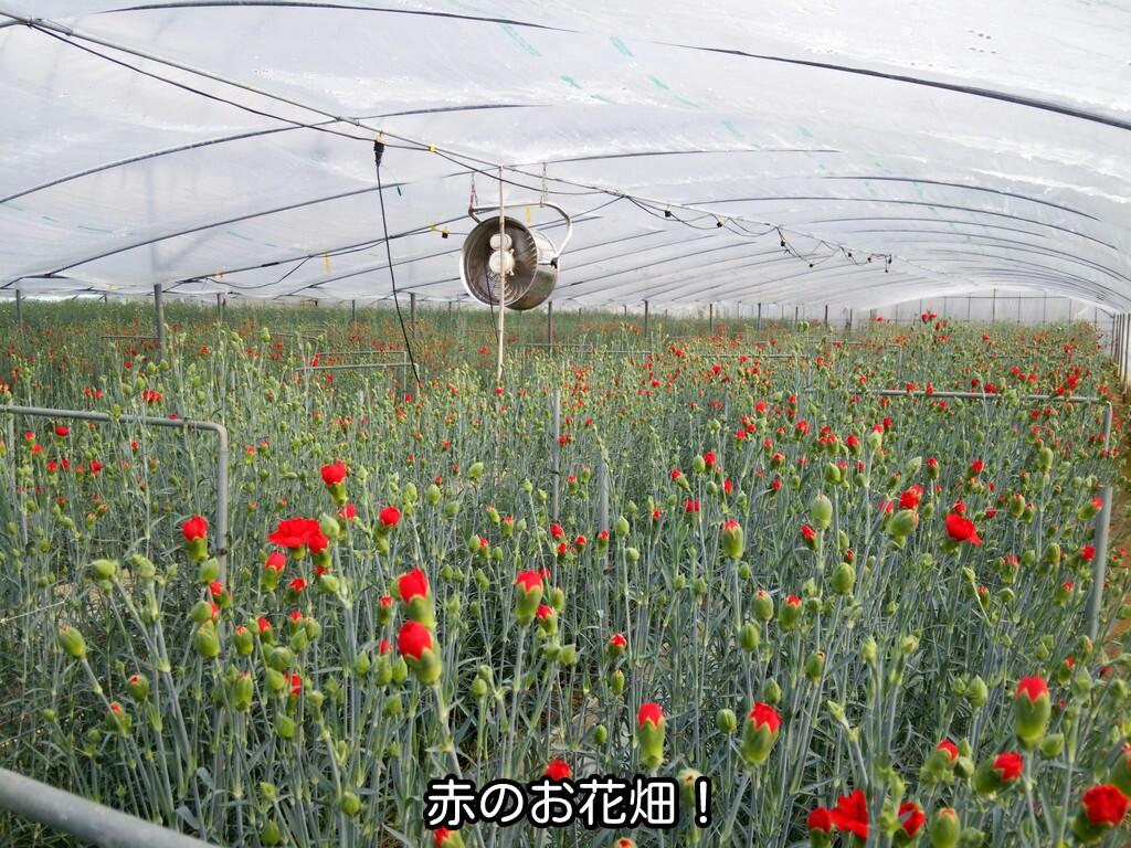赤のお花畑