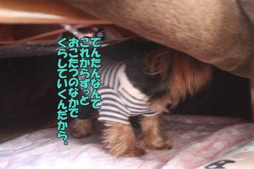 IMG_002402141.jpg