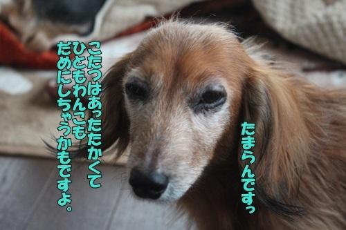 IMG_93051123.jpg