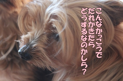 IMG_95120110.jpg