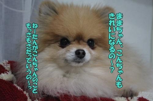 IMG_96620117.jpg