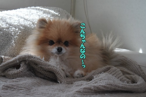 IMG_97520122.jpg