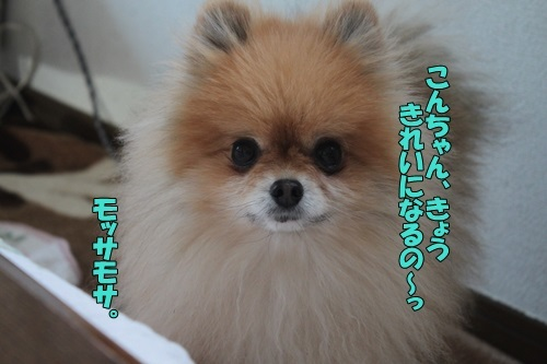 IMG_97980125.jpg
