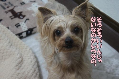 IMG_994102061.jpg