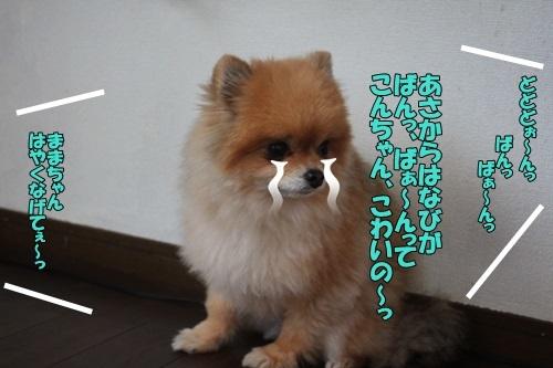 IMG_99850211.jpg