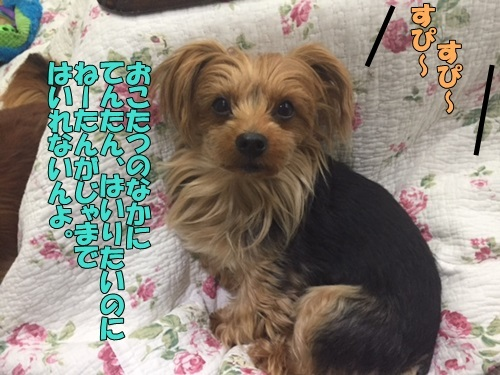 image40108.jpg