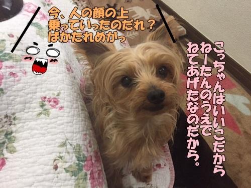 image50108.jpg