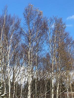 s-修道院近くの木々 (1)