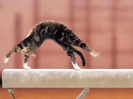 cat-Favim_com-814497.jpg