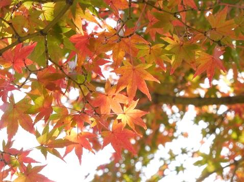 通りすがりに見かけた紅葉