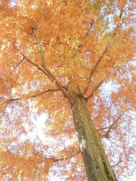 通りすがりに見かけた紅葉か?黄葉か?
