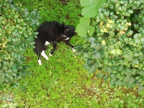 通りすがりに見かけた猫(764)