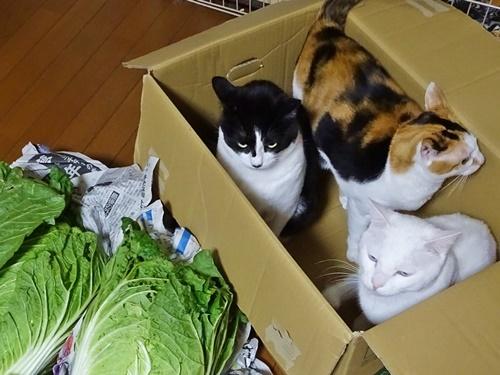 新鮮野菜届く♪
