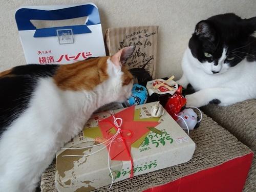 Gaviちゃんからプレゼント♪