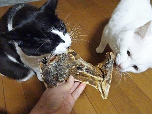 うまうま試食会