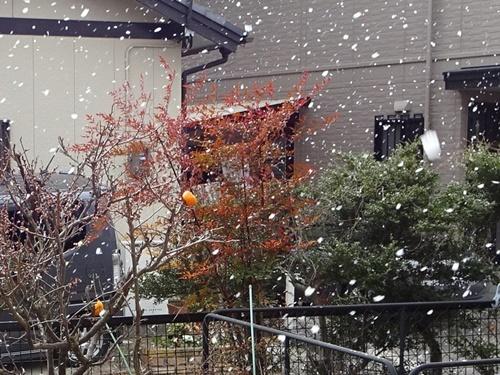 雪も降ったよ♪