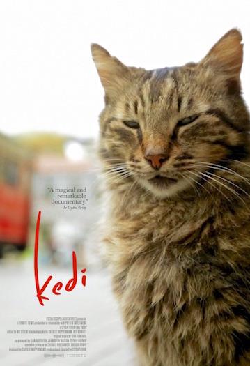 Kedi Poster