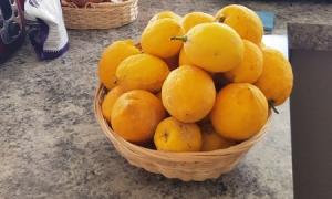 ニュージーランドでレモン