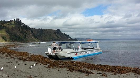 ニュージーランドのグラスボトムボート02