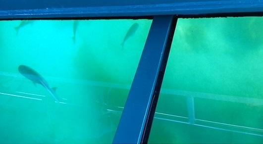 ニュージーランドのグラスボトムボート06