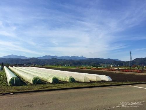 2016野菜収穫ツアー03