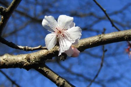 170103桜山 (7)s
