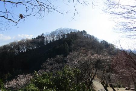 170103桜山 (13)s