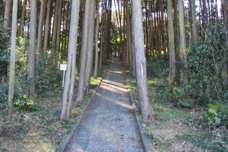 170121城山(坂戸市) (2)s