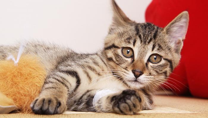 【不思議な話】あれは猫又だったのか、空耳だったのか