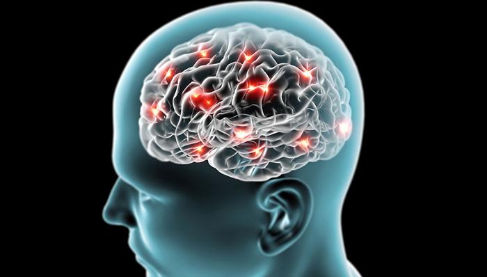 脳梗塞で死んだ脳神経細胞を再生する細胞「iSC細胞」を発見 定説覆す/兵庫医科大