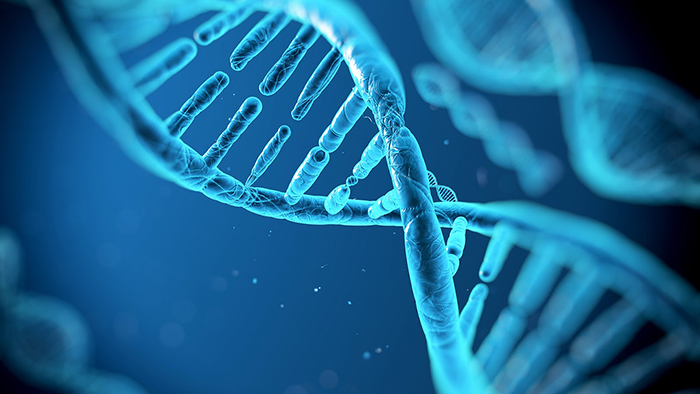 近い将来、iPS細胞から「中身が人間」「外見が豚」というバケモノが製造される?