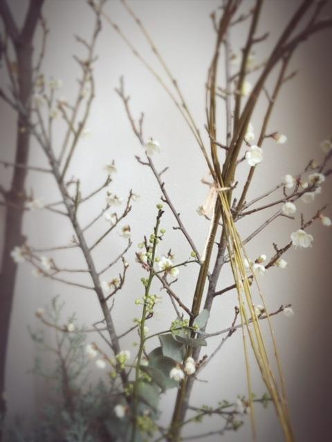 2017.1.8初春