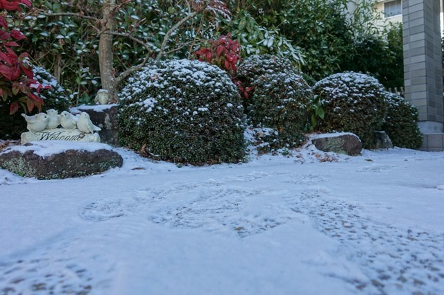 6 自宅 雪景色 (4)