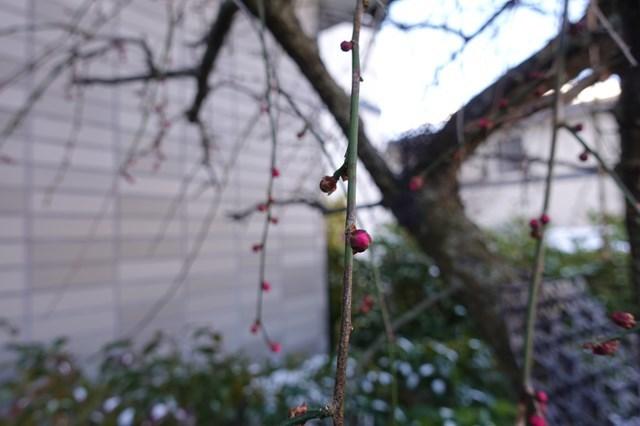 6 自宅 雪景色 (5)