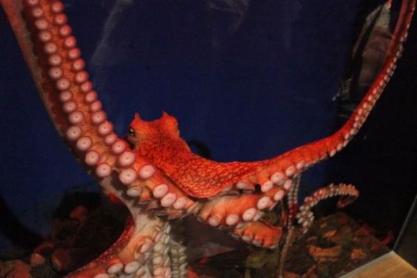 Octopus 7868