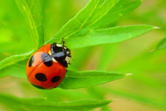 【正体】昆虫とは一体、何なのか?あんなに小さな脳でなぜ複雑な行動をしているのか