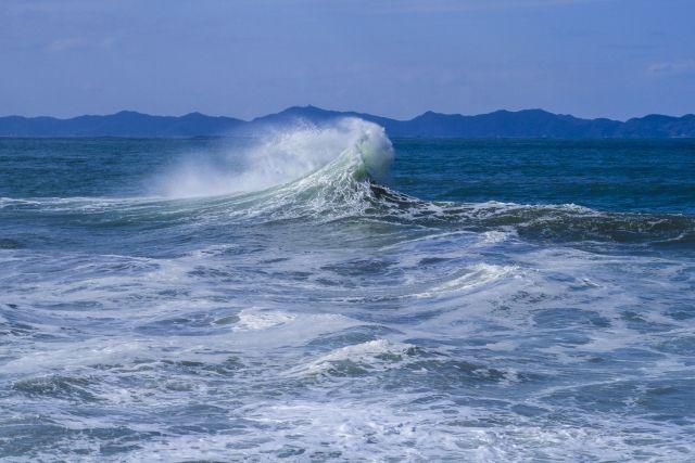 【日本海】新潟で珍しい魚が次々と見つかる!深海魚や外洋性の魚「クサビフグ、アカナマダ、ヤリマンボウ」など