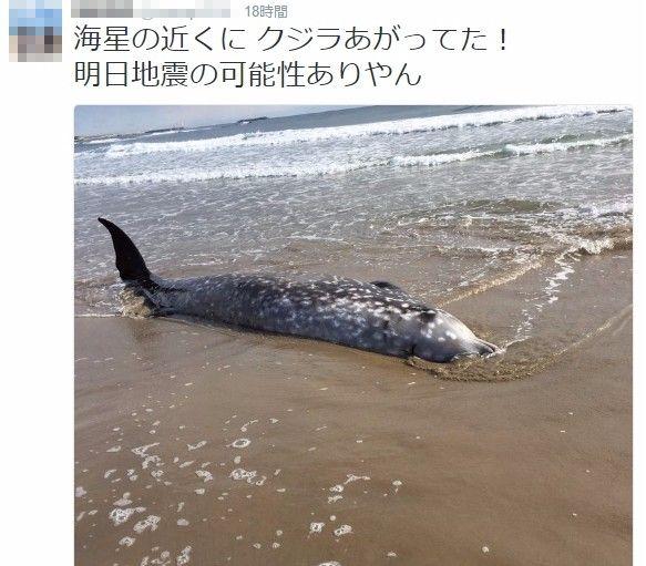 【前触れ】福島県いわき市の砂浜にクジラが打ち上がる…「目立った傷はなし、病気で打ち上げられたのではないか」