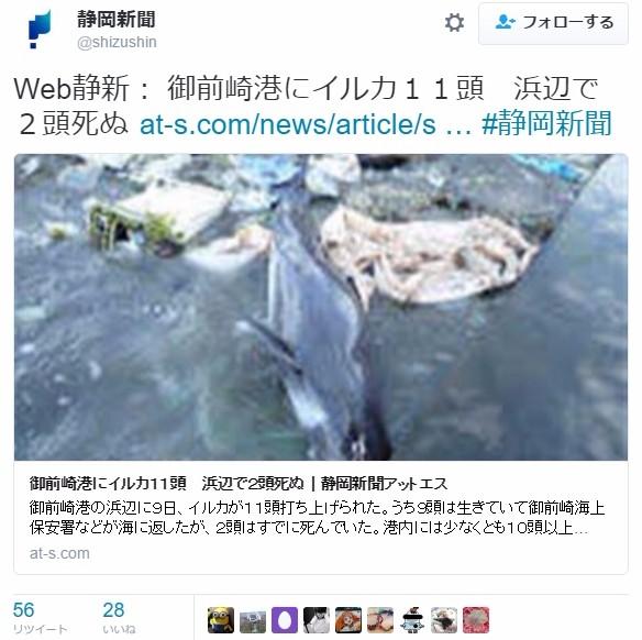 【駿河湾】静岡県御前崎港に「イルカ11頭」が打ち上げられる…今日は11日でイルカは11匹、12日は満月!