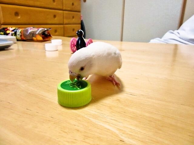 ハッピーキャップ遊び