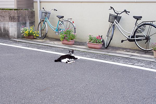 寝そべる白黒猫
