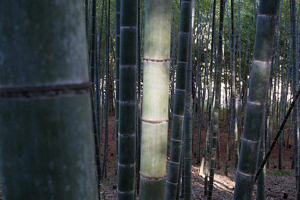 竹林の陰影