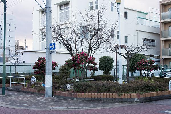 山田幼稚園公園