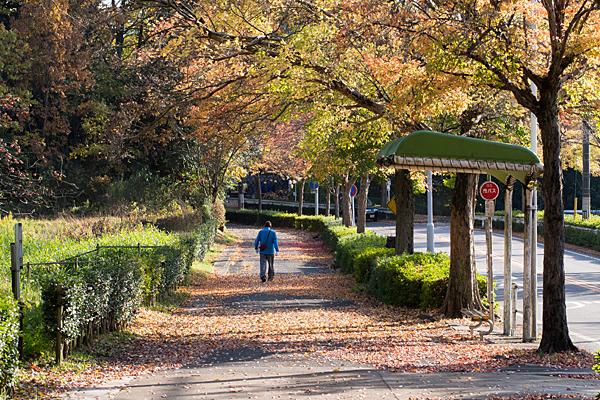 平和公園紅葉の頃