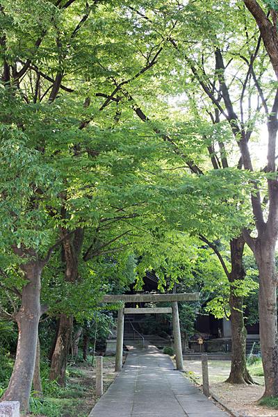 須佐之男神社境内と森の風景